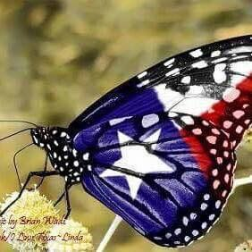 State Butterfly Of Texas Down South