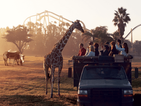 5ddc0130eec366c9ed7d166d8b4ec6bb - Is The Safari Included In Busch Gardens