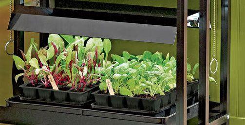 Gardening Under Grow Lights Indoor Vegetable Gardening 400 x 300
