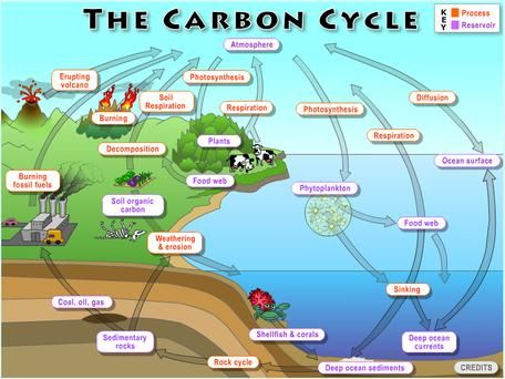 Lab 2 The Carbon Cycle What Goes Around Comes Around Carbon Cycle Ap Environmental Science Environmental Science