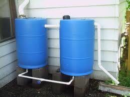 Rain Barrels for veggie garden. Just add perforated PVC runs.