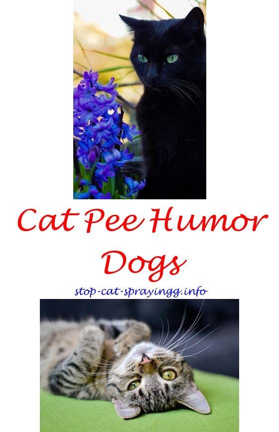 14 Ft Boat Trailer Plans Male cat spraying, Cat spray