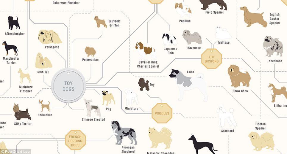 Best Designer Dogs For Families
