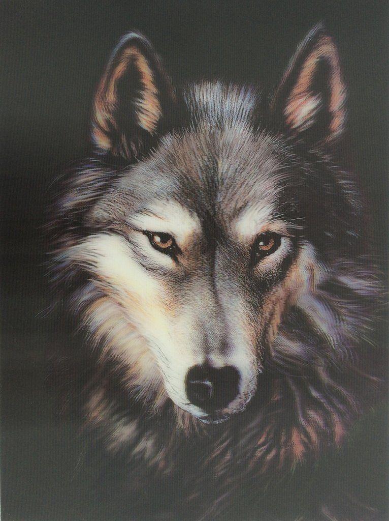 3d picture wolf head wolf face australian shepherd