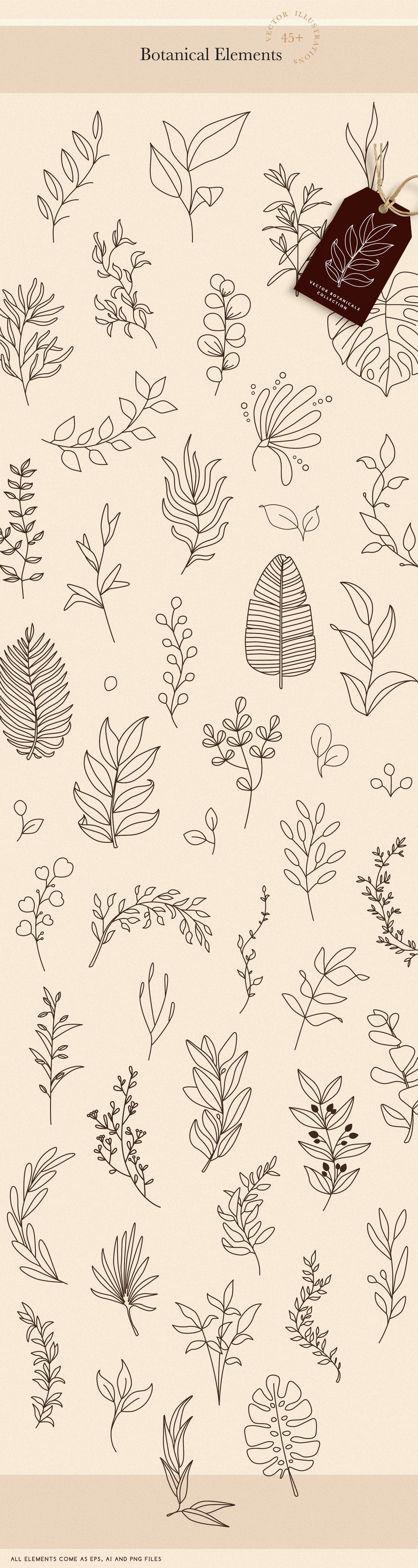 Botanical Elements for Logo Design en 2020 (avec images)