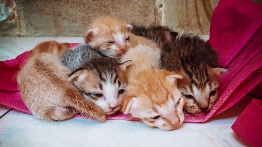Kitten Newborn Baby Cats Learn Stock Footage Video (100