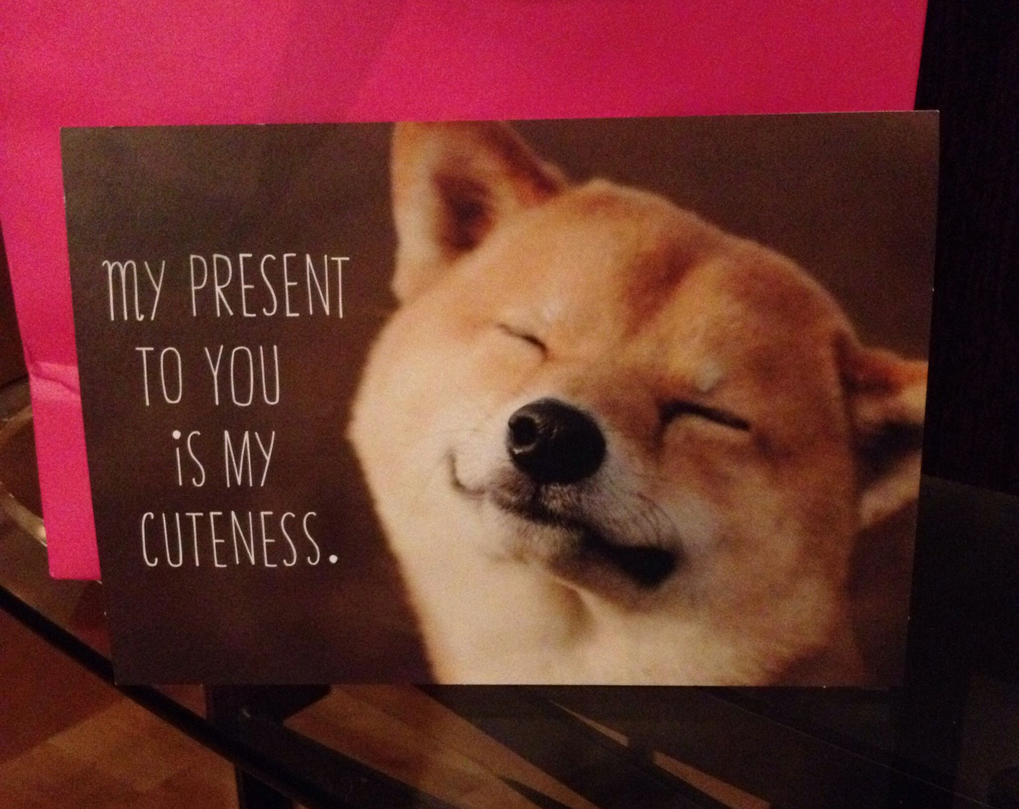 Cutest birthday card!!🐾 (With images) Cute animal memes