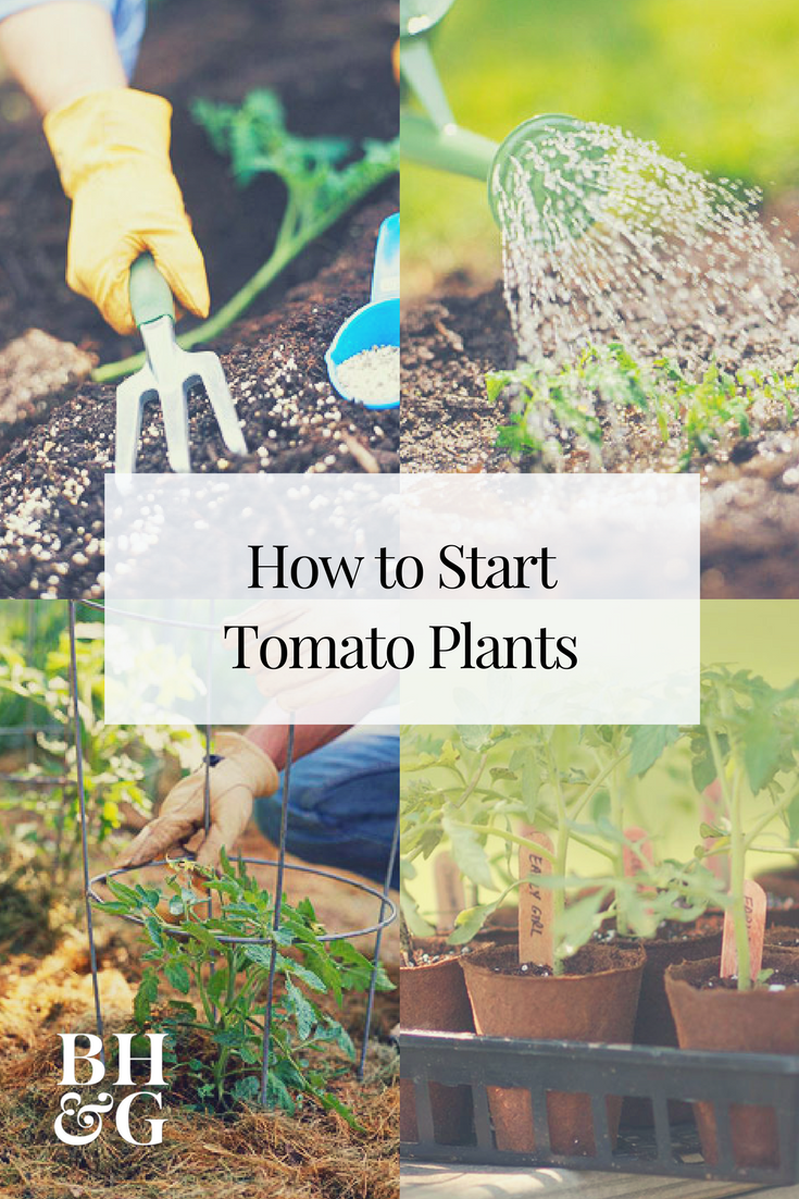 Get Your Edible Garden Off To A Great Start With These Tips That Will Teach  You How To Grow A Perfect Tomato Garden! Your Tomatoes Will Get A Strong  Start ...