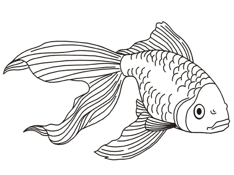 Fish Coloring Page For Aquatic Pet Coloring Dear Joya Kids