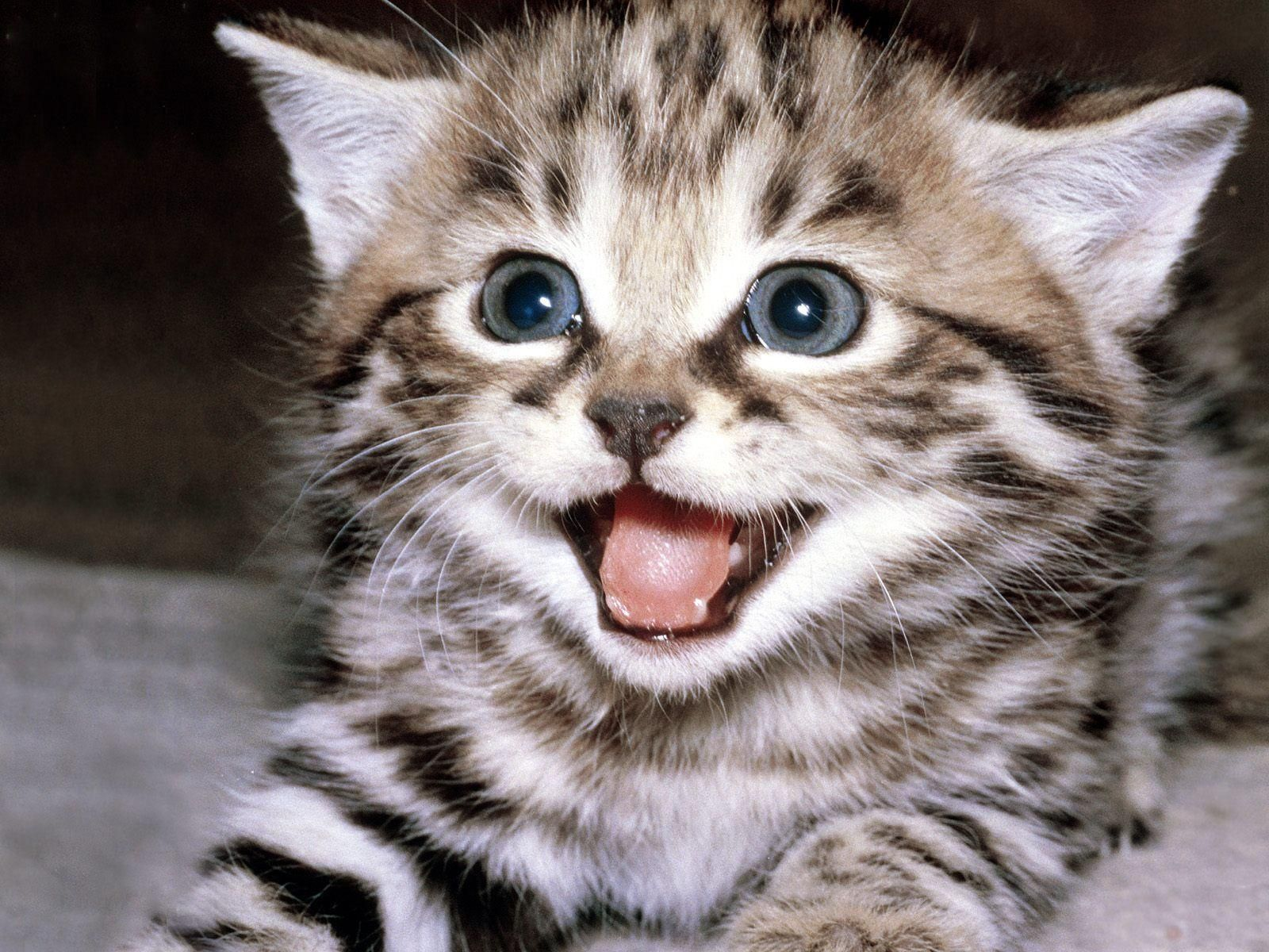 Tfw Your Owner Refills Your Food Bowl Cat Memes Kittens Cutest Kitten Pictures