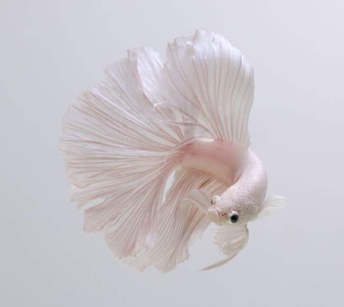 Фото рыбок: потрясающие портреты танцующих рыб, которые ...