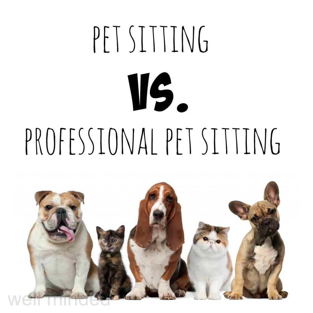 Haus Sitting: Pet Sitting Vs. Professional Pet Sitting