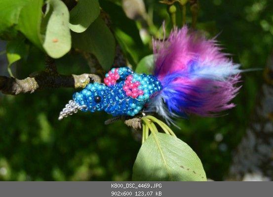 prächtige vögel in xxl  update  seite 3  vögel