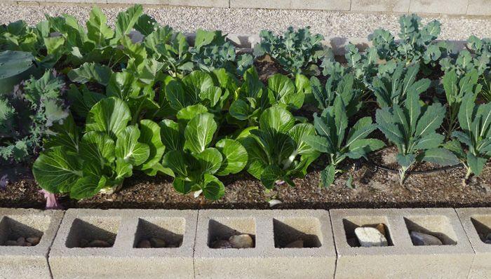 5ddff0c0580cab3ca5b6766fd168bf0d - Vegetable Gardening In The Desert Southwest