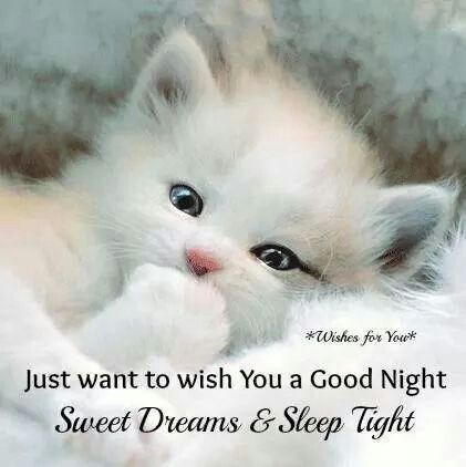 Goodnight Messages The Best Free Advertising There Is Kittens Cutest Cats Cute Cats