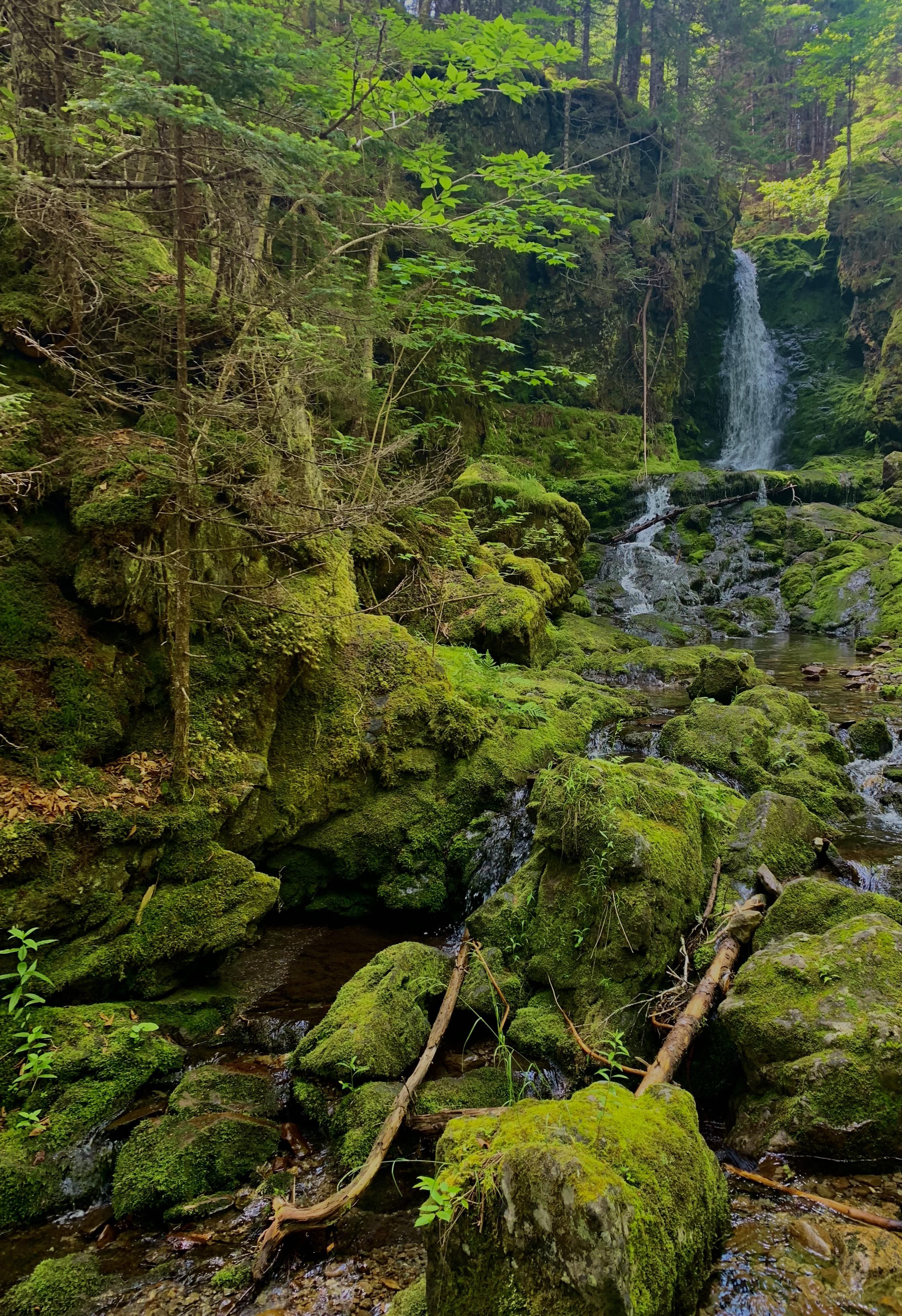 Fundy national park new brunswick canada oc 2685x3915