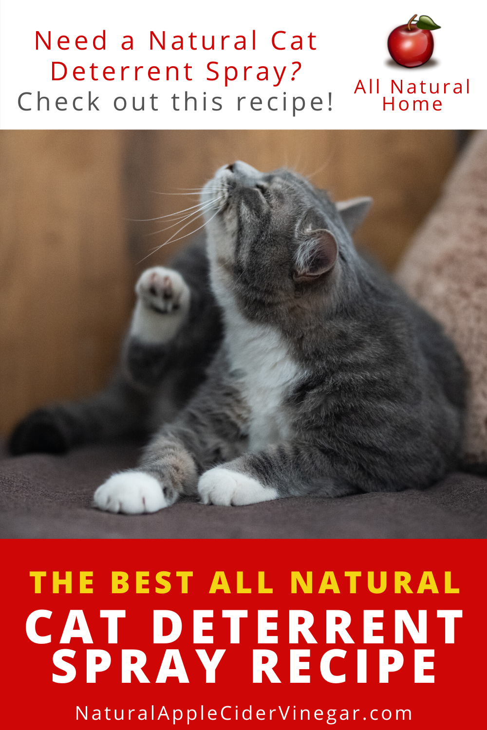 The Best All Natural Cat Deterrent Spray Recipe All Natural Home