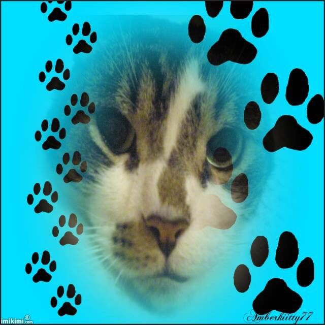 Mom cat tiger passed away 14 years old in July 16 2014❤️