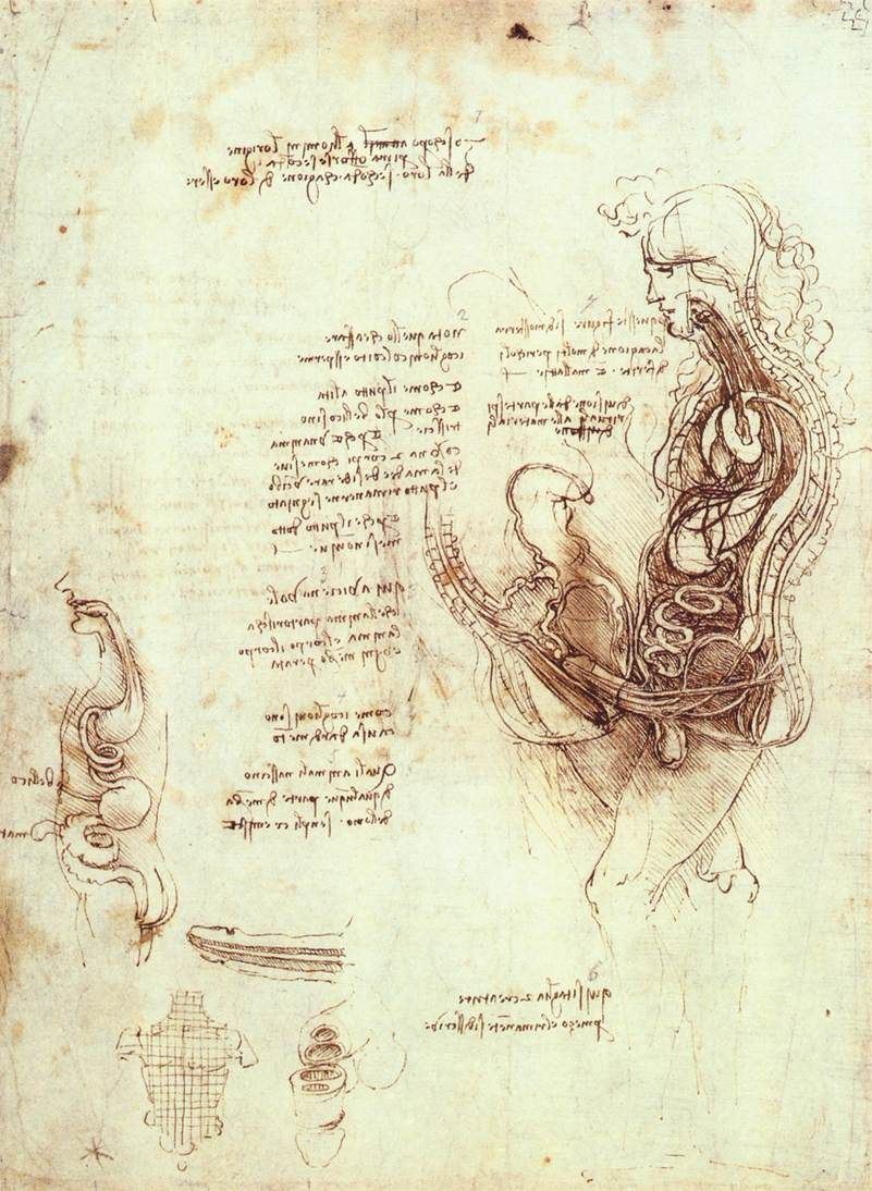Studies of the sexual act and male sexual organ, 1492 - Леонардо да ...