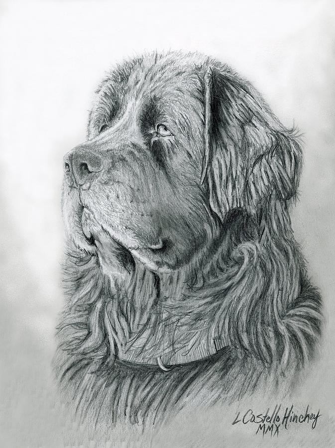 Newfoundland Art Print By Linda Costello Hinchey