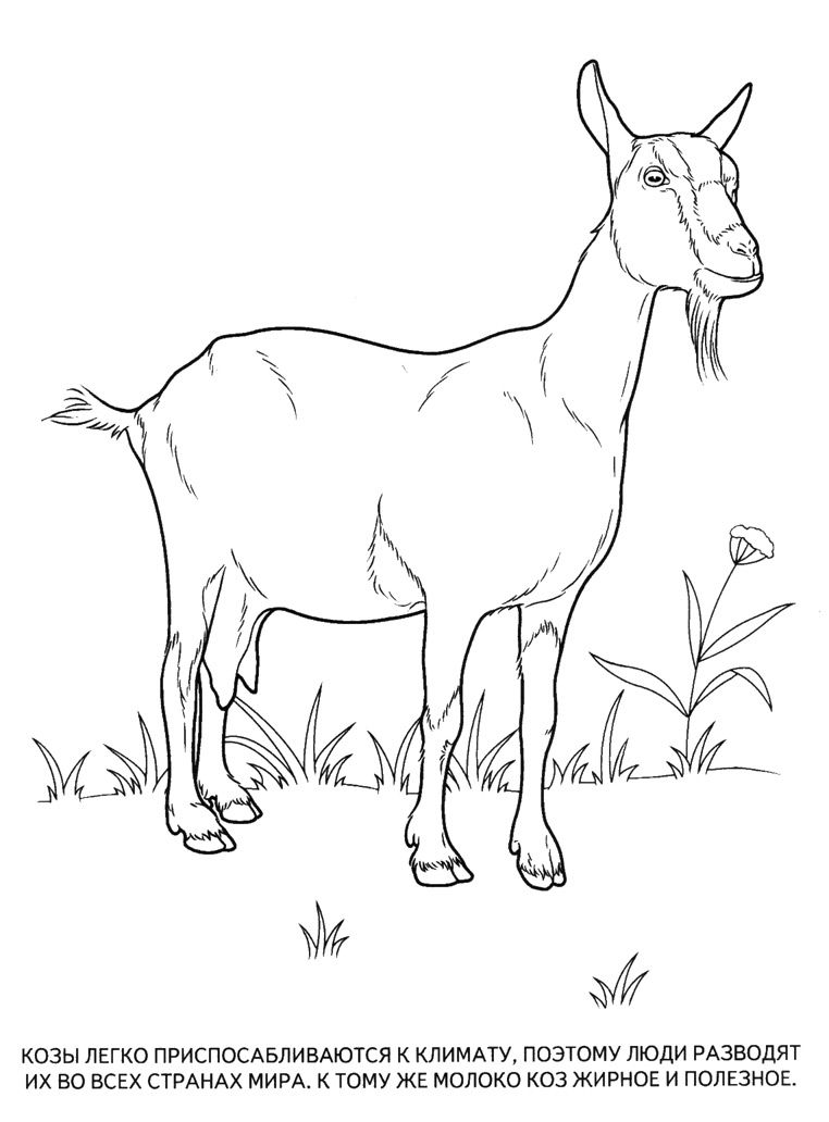 20 Jpg 762 1032 Goat Art Animal Coloring Pages Animals