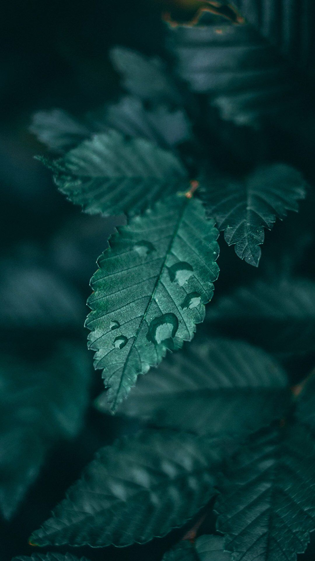 Pin By Kiddo On Gᴙeen Dark Green Aesthetic Green Nature Leaf