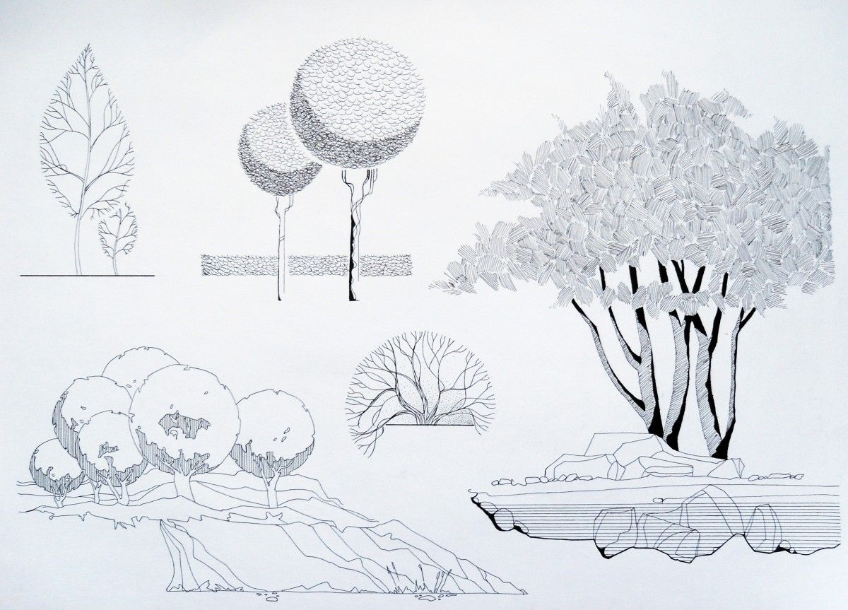 Architecture Drawing Of Trees 667 best landscape architecture drawings images on pinterest