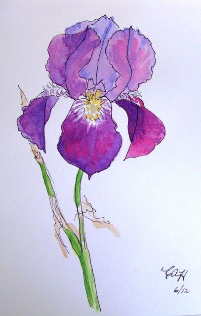 Iris Drawing Google Search Iris Art Iris Painting Iris Drawing