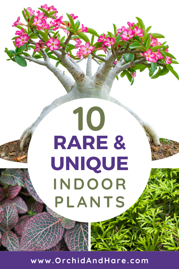 10 Rare & Unique Houseplants You Will Love [Includes Care Instructions] is part of Plants, Indoor plants, Houseplants, House plants indoor, Low light plants, Easy plants - 10 unique houseplants that you've probably never heard of! Time to think 'outside the pot' and try one of these easy to care for, but rare indoor plants