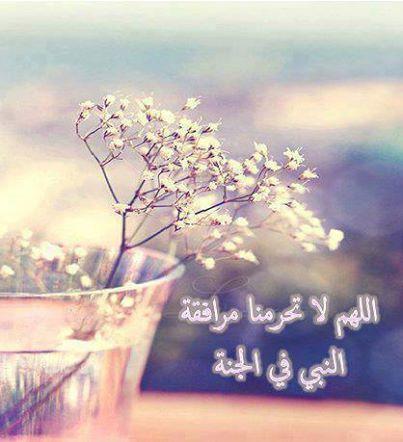 اللهم لاتحرمنا مرافقة النبي في الجنة اللهم آمين Beautiful Chickens Photographer Quran Verses