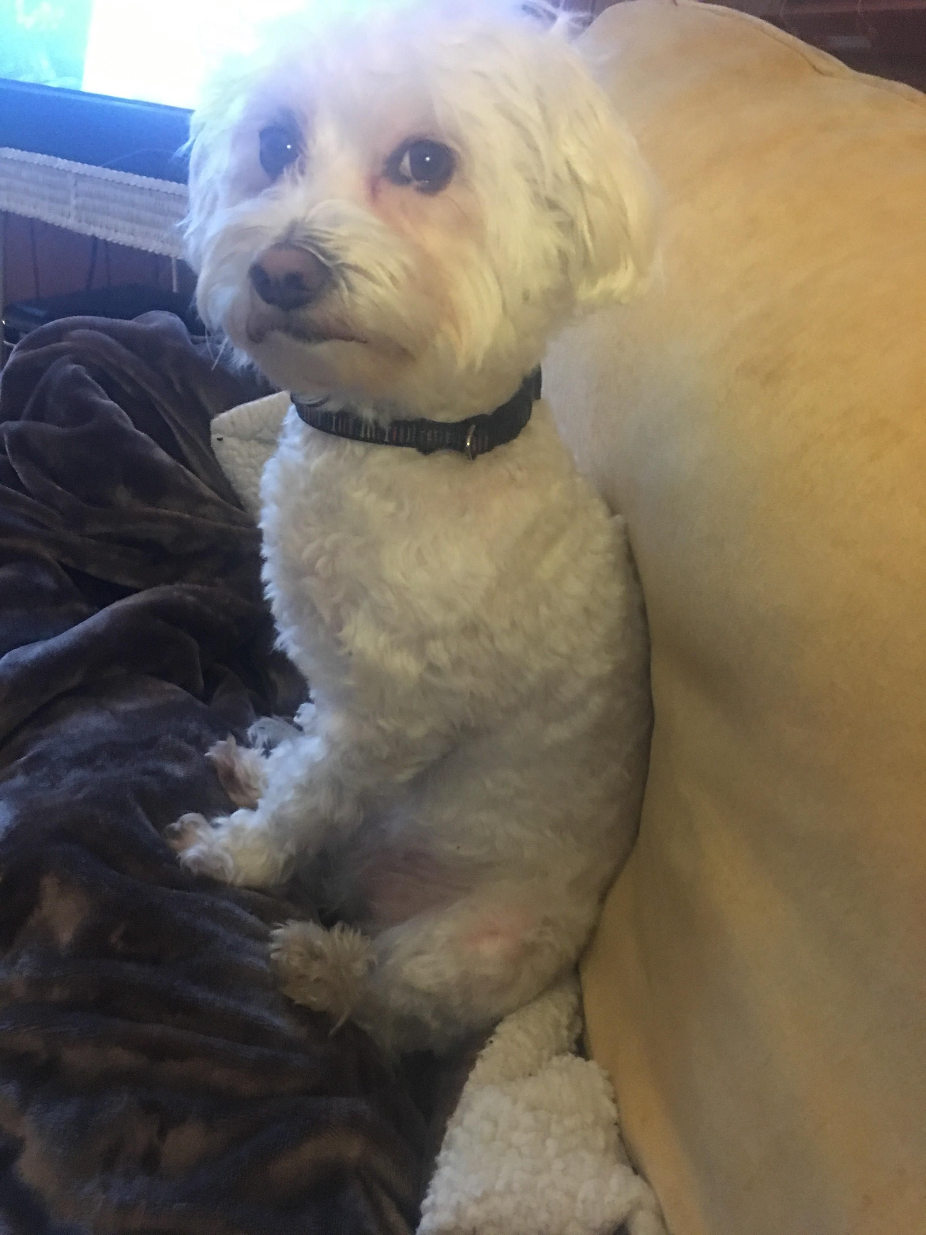 Sitting Up Like A Proper Human #Dogpictures #Dogs #Aww #Cuteanimals