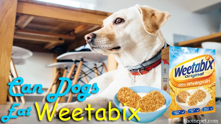 Can Dogs Eat Weetabix Dogs Can Dogs Eat