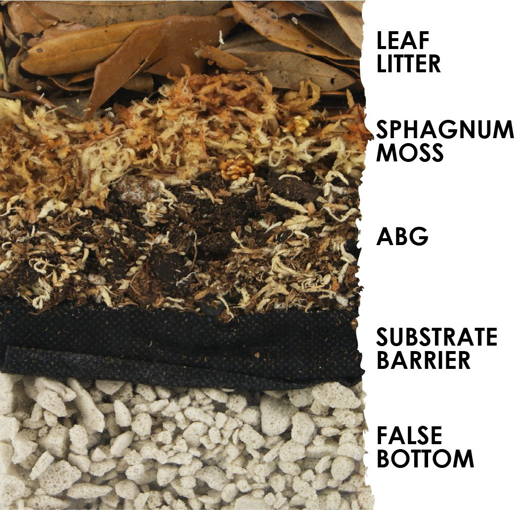How Much Substrate Do I Need For A Naturalistic Vivarium Or