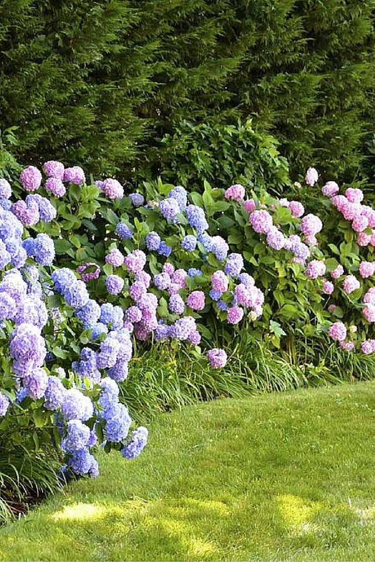 35 Hydrangea Garden Ideas Pictures Home Stratosphere Hydrangea Garden Flower Garden Plans Outdoor Herb Garden