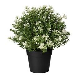 plants plant pots stands plants ikea white and. Black Bedroom Furniture Sets. Home Design Ideas
