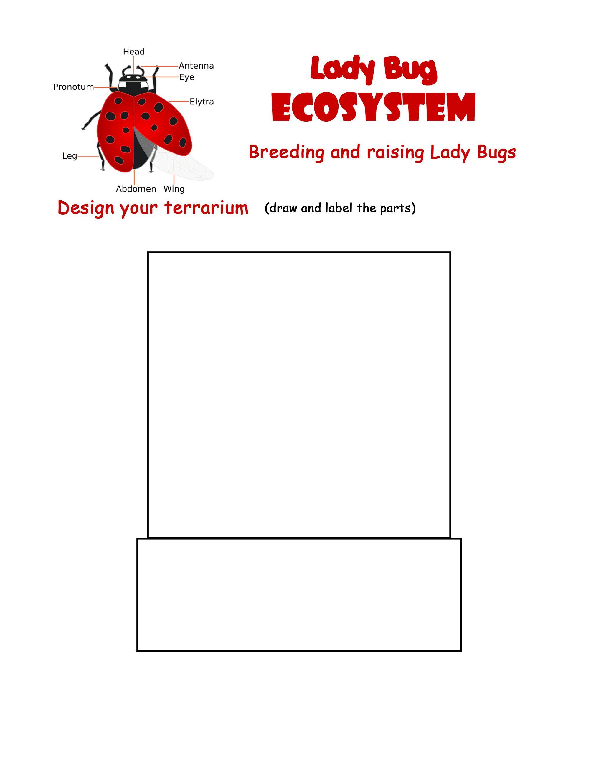 Ladybug Terrarium Worksheet