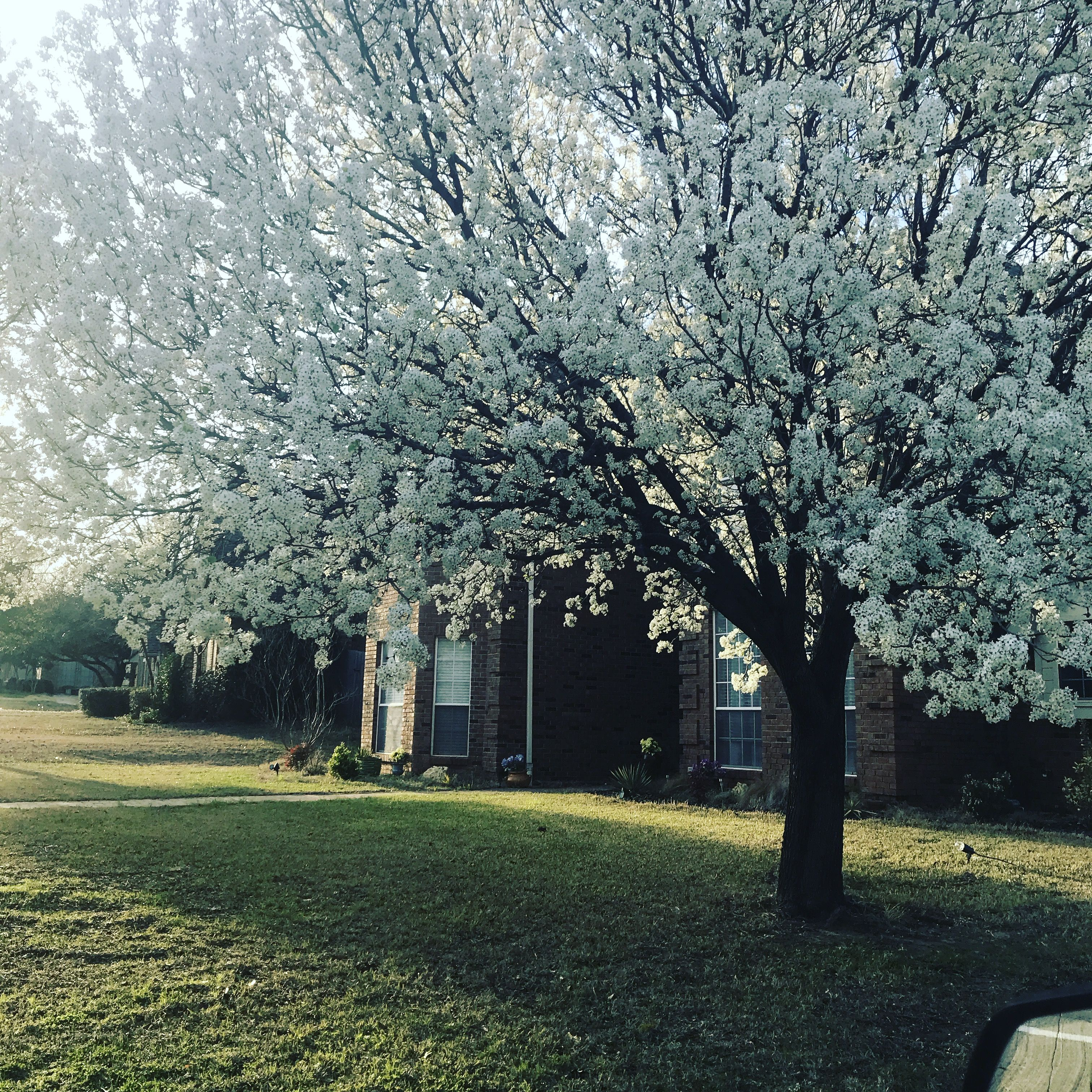 Spring Dallas Texas Tree Lined Driveway Dream Backyard Garden Cottage Garden
