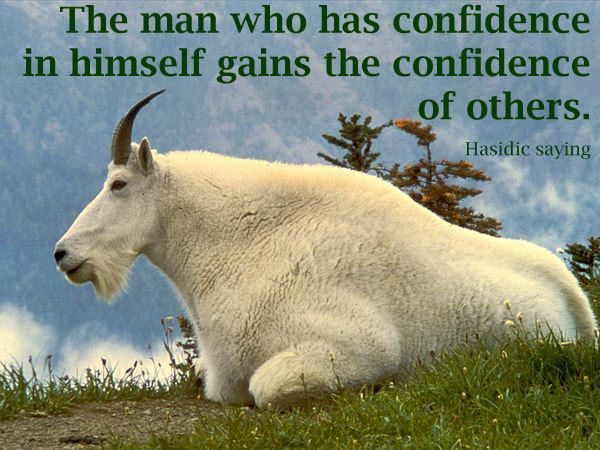 Quotes About Goats Best Goats And Inspirational Quotes  Goat Quotes  Motivational  Pinterest