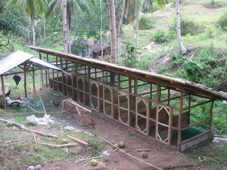how to start a chicken breeding farm
