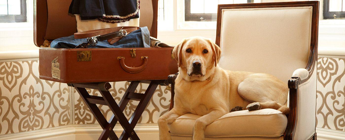 Pet friendly Dog friendly hotels, Pet friendly hotels