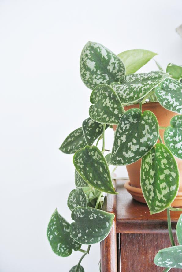 My Attic: succulent, greens, hanging plant
