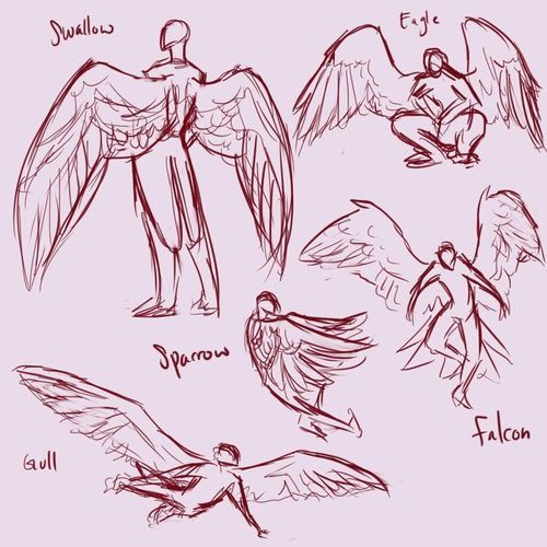 Wing Reference Art Reference Poses Drawings Drawing Reference