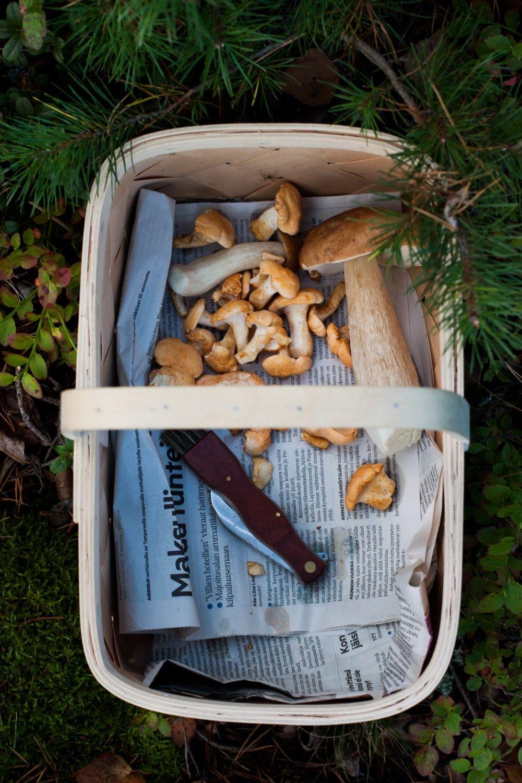 15+ Into The Woods – Crostini with Wild Mushrooms & Ricotta   Stuffed ... Bilder