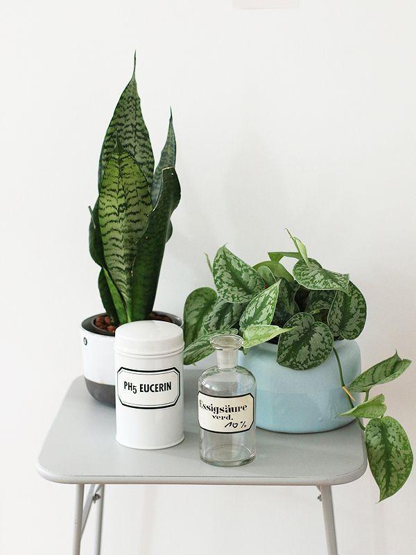 Vintage plant styling #LoveNature