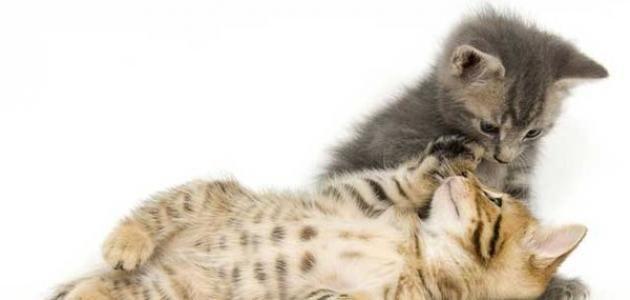 كيف أطعم القطط الصغيرة Sleeping Kitten Kitten Care Cats
