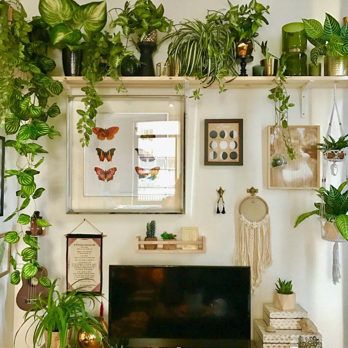 Pin von Kiki Stephens auf House Plants   Pinterest   Pflanzen ...