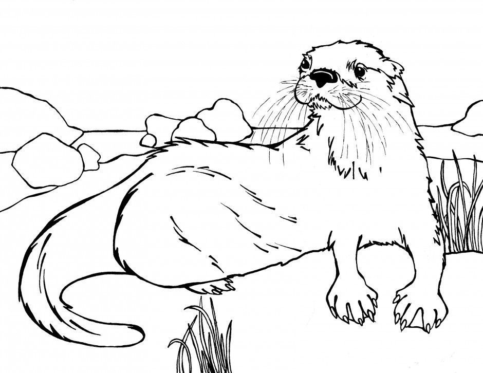 sea otter coloring pages google search
