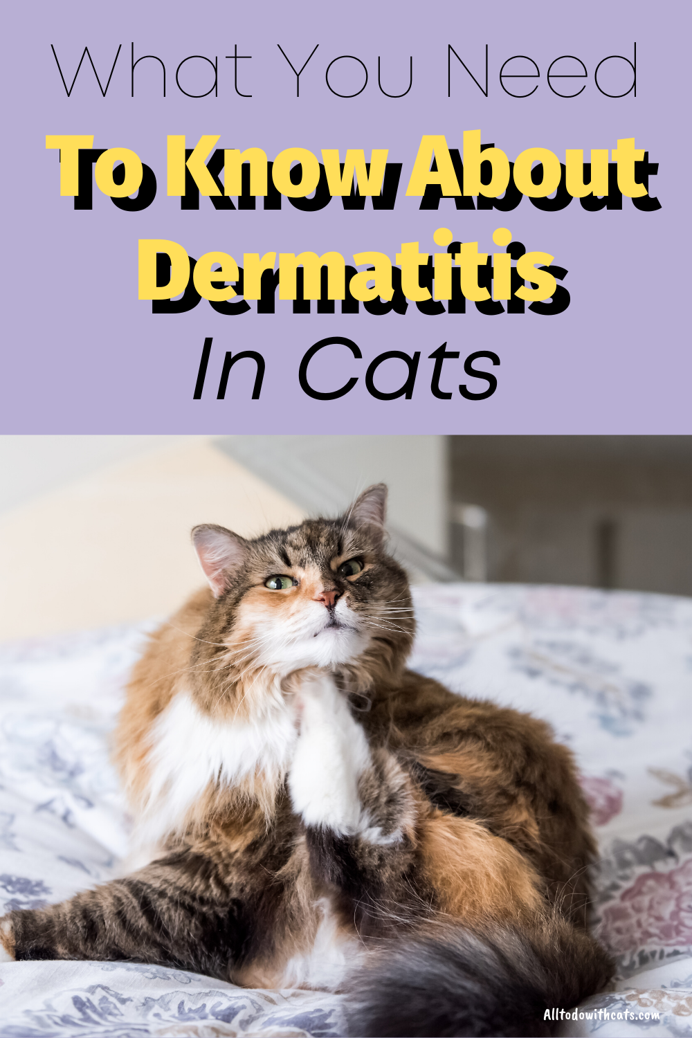 How To Treat Dermatitis In Cats What You Need To Know In 2020 Cat Skin Problems Cat Skin Cat Health Problems