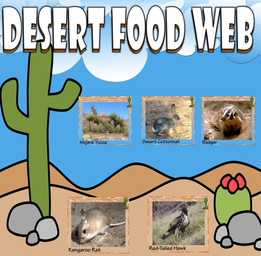 Desert Food Chain Food Web Card Sort Food Web Middle School Activities Fun Science
