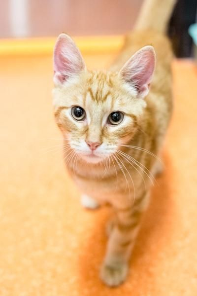 Hello I M Sonny I M One Of Many Kittens At The Rspca Looking For